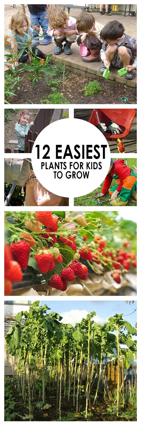 12 easiest plants for kids to grow