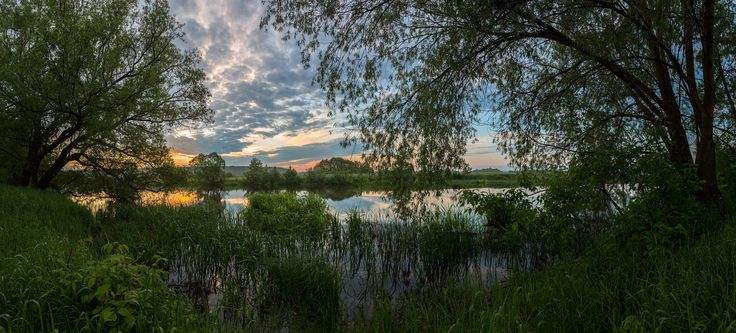 On the shore in the bush willow by Alexandr Bredikhin on 500px