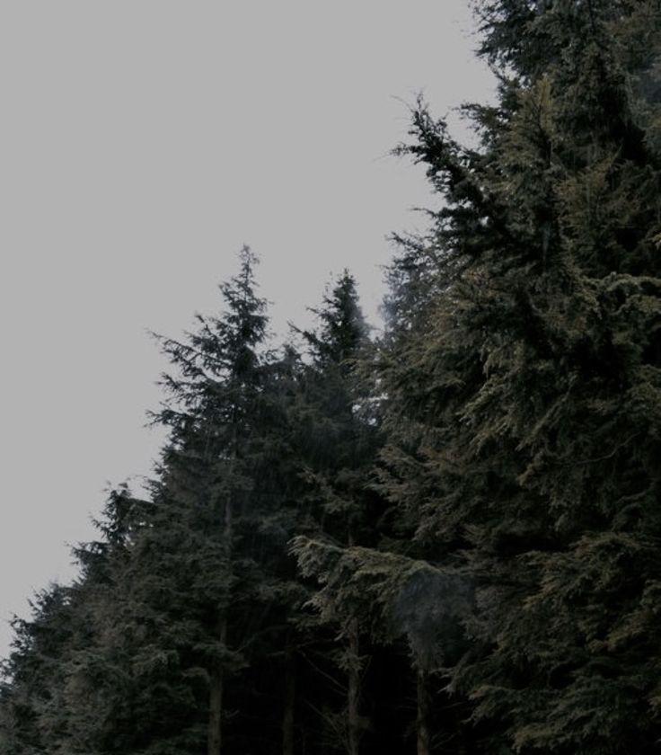 Pinterest Aleahhrose ↠☾ 176 ∘ Twin Peaks Aesthetics