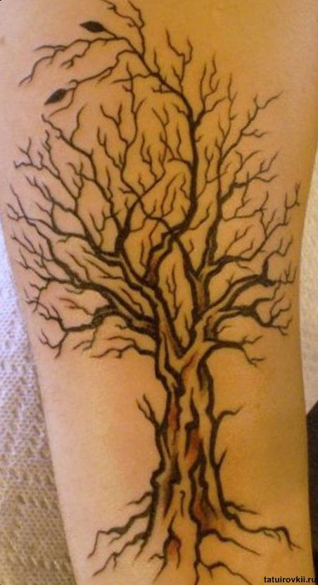 tree tattoos tat tat tatted up