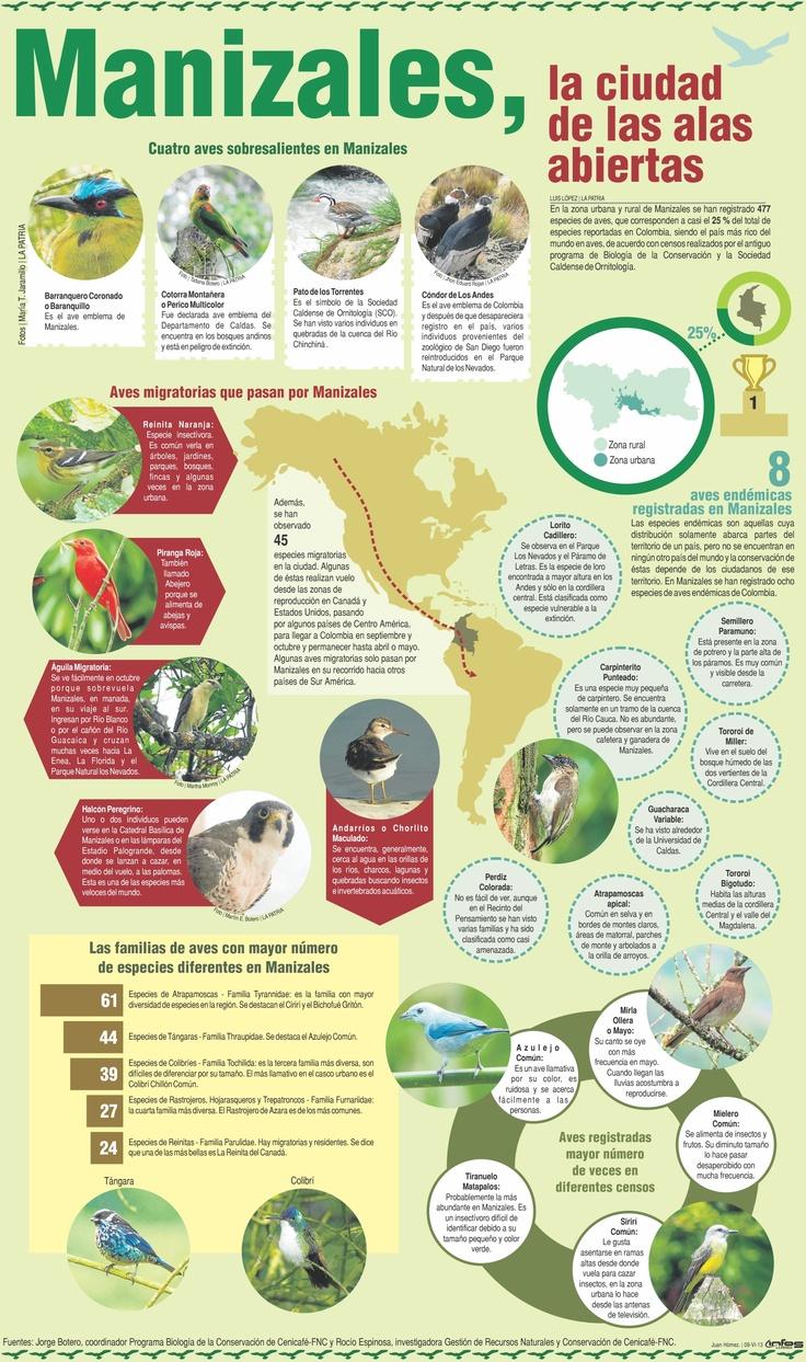 infografía aves de Manizales