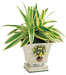 indoor palm tree care instructions