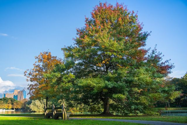 Big Tree in the Park in Autumn | #desktop #wallpapers #photography #nature #photos #Autumn #bench #leaves #park #trees #river