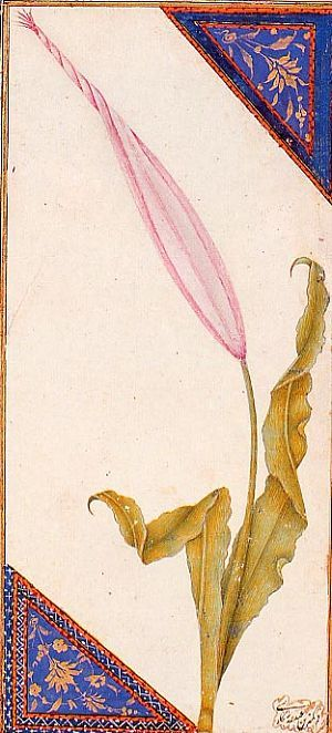 Tulip from Istanbul's palace gardens • miniature painting by Abdullah Buhari • 16th Century