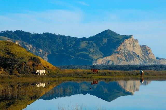 Wild horses in Cucao, Chiloé, Chile.