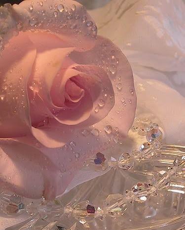 Rosa com cristais. #Flores #Natureza