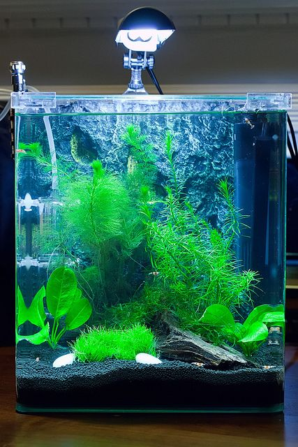 25 best ideas about betta aquarium on pinterest betta for Betta fish tank ideas