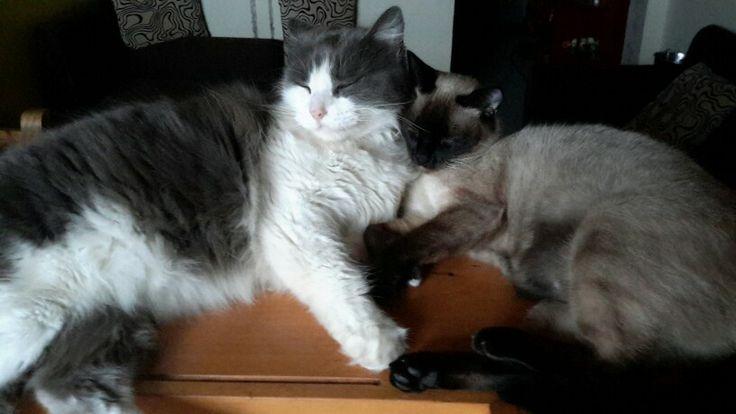 Durmiendo con la prima Micha-cha-cha. #cat #gato