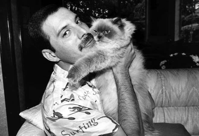 Freddie Mercury con uno de sus gatos.