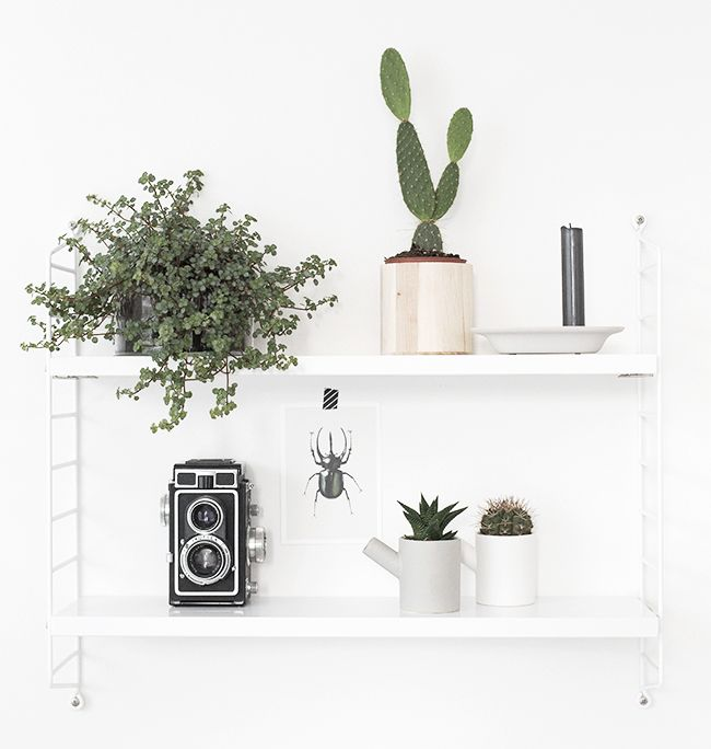 BEELDSTEIL.com Plant Shelfie | Urban Jungle Bloggers As I showed you on Instagram, greens are taking over my home. A good reason to join #UJB #plantshelfie