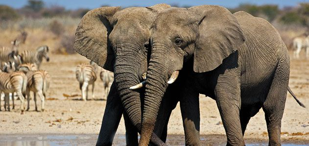 """Smithsonian Magazine 