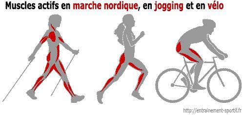 Muscles actifs en marche nordique, en course et en velo
