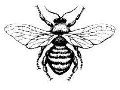 Resultado de imagem para bug tattoo