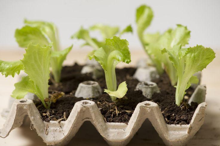 Las 25 mejores ideas sobre cultivar rbol de aguacate en for Plantas para huerta organica