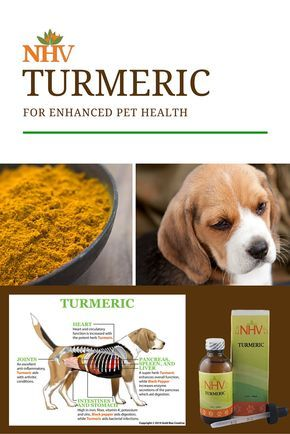 Many of us have Turmeric sitting in our spice cabinets for use in seasoning, but did you know that in humans and pets, Turmeric also has qualities as an antibacterial agent, anticoagulant, analgesic, anti-inflammatory, antioxidant, anticarcinogen, and neuroprotector? Learn more about NHV's Turmeric for enhanced pet health now!  http://www.nhvnaturalpetproducts.com/Products/TURMERIC-for-dog-cancer-symptoms.aspx