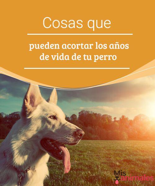 Cosas que pueden acortar los años de vida de tu perro - Mis Animales  Hay diferentes causas que pueden acortar la vida de tu perro, la edad, el ritmo de vida, la alimentación o el que puedan padecer determinadas enfermedades. #vida #perro #salud #acortar