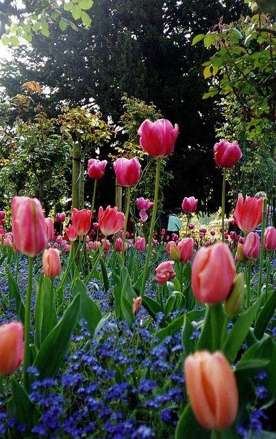 Monet's Garden, Giverny - France