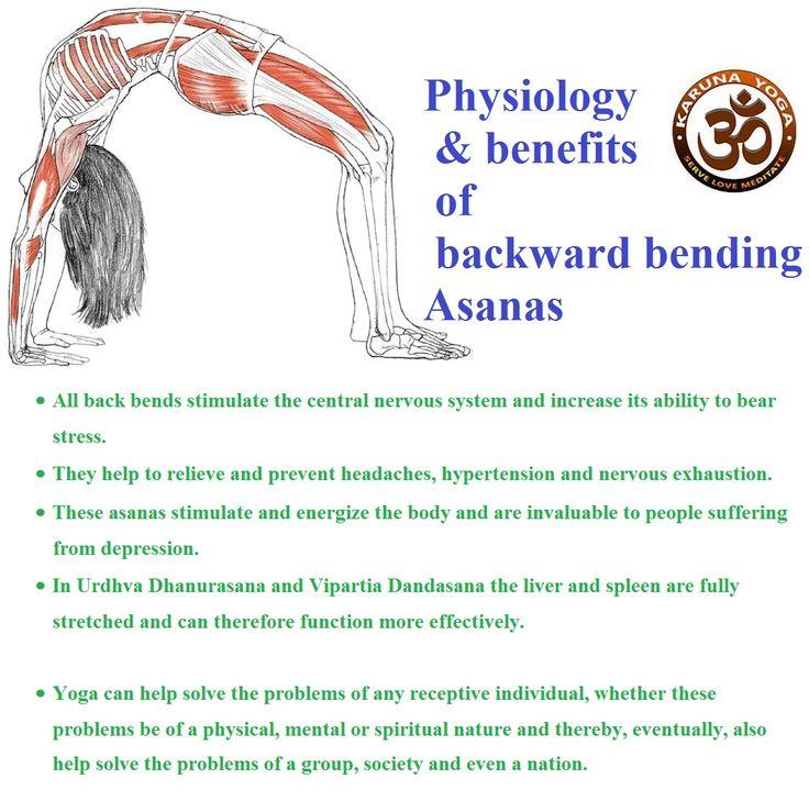 The 10 best anatomy physiology of yoga images on Pinterest   Anatomy ...