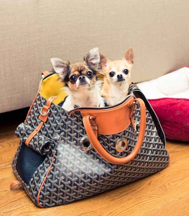 Both dogs were total impulse buys. I got Chloe [the fawn coloured Chihuahua] in 2006. I was walking past a pet store uptown and saw her in the window and decided to go inside and play with the puppies. I fell in love with her and had to have her! I was flying to Tokyo the next day to do a CHANEL show, so I asked them to hold her for me when I returned. Winnie [the black and white Chihuahua] was a similar story. I was walking home from brunch with my mother and we saw her in the window…