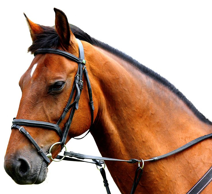 054-paarden-shutterstock-engelse-volbloed.jpg (2016×1851)