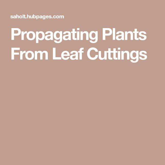 Propagating Plants From Leaf Cuttings