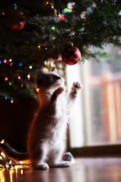 mew! christmas spirit. Oh boy what I have to look forward to!