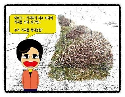 나무 가지 묶기
