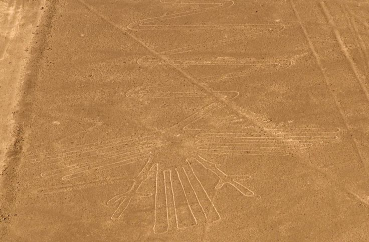Nazca Line Peru - Heron