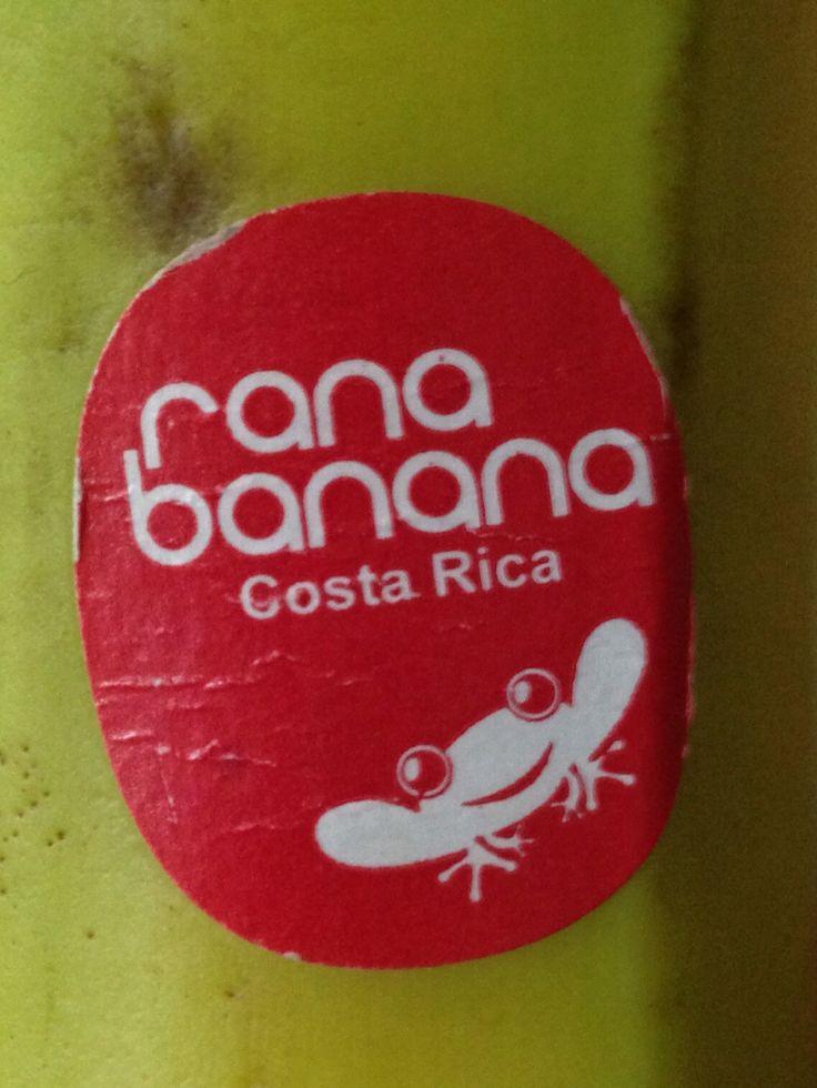Rana bananas, Costa Rica
