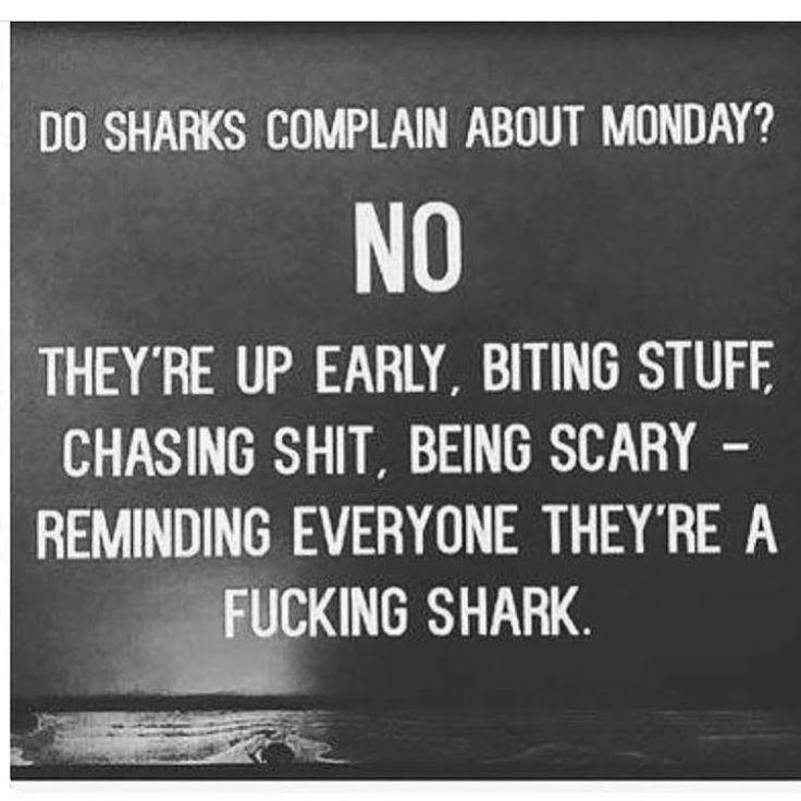 Be a fucking shark