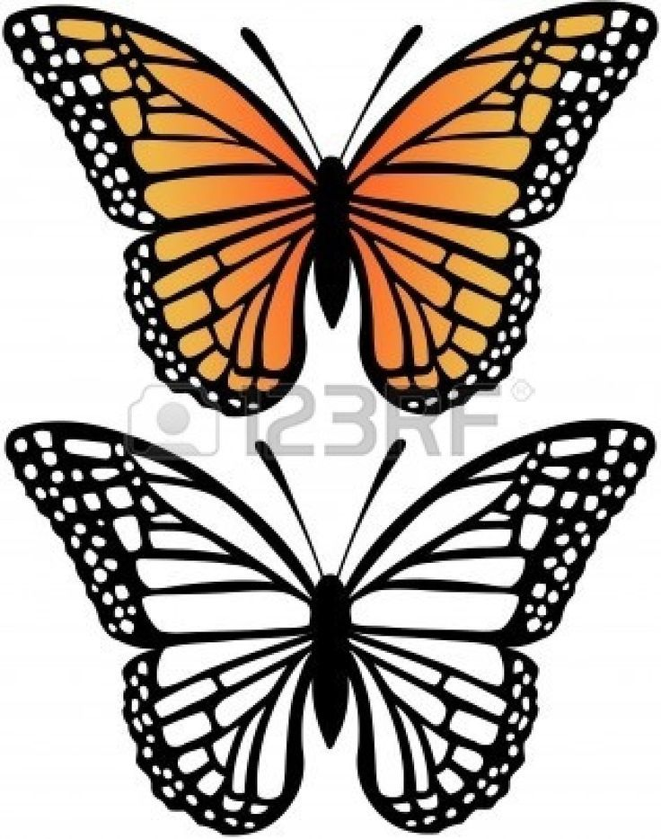 736x933 33 Best Black And White Butterfly Tattoo Art Images