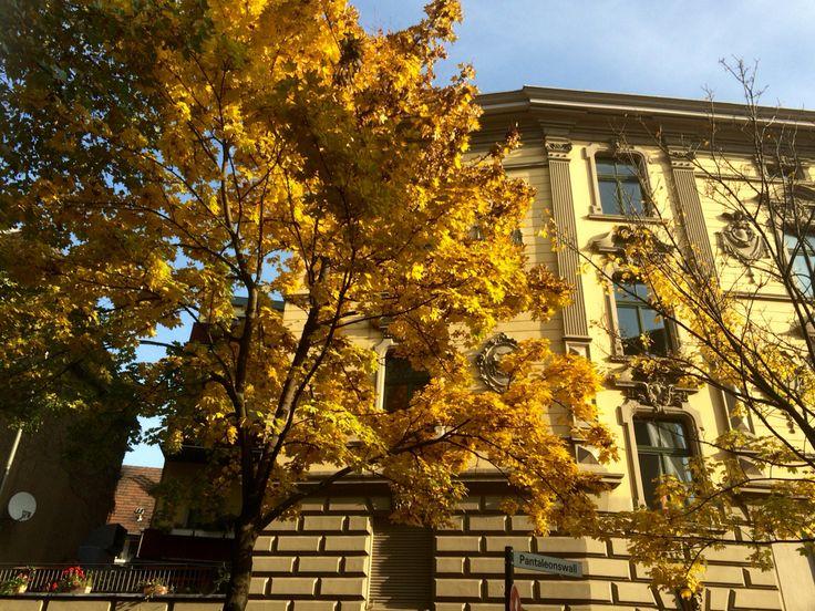 autumn, cologne