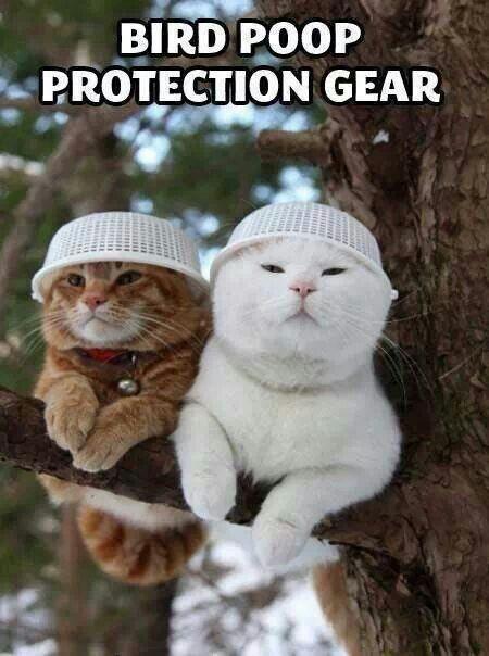 Bird poop protection gear animals Pinterest