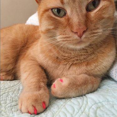 Proviene anche essa dagli Stati Uniti e si chiama #PAWDICURE.   Consiste nel colorare e abbellire le unghie di cani e gatti con smalti appositamente pensati per gli animali. Questi prodotti sono ovviamente atossici e totalmente innocui se mordicchiati ed ingeriti e sono dotati di un apposito pennellino di precisione per raggiungere anche le unghiette più piccole.  🐾.. E VOI, CHE NE PENSATE? 🐾