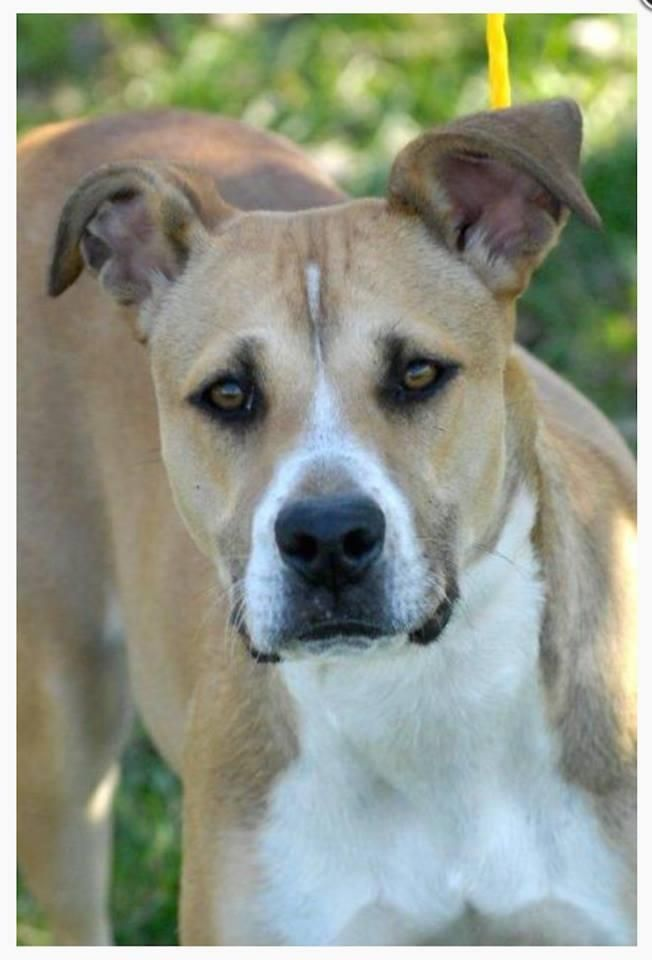 Mechanicsburg, PA * Karma recently came to Im-Paws-Able and while here, she has proven to be quite a love. Karma once had a home that loved her and it shows! While here, Karma has been crate-trained and learned basic obedience.Karma is just dying for a family to call...
