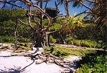 Henderson Island (Pitcairn Islands) - Wikipedia, the free encyclopedia