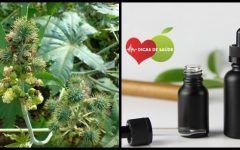 Os 10 Benefícios do Óleo de Rícino Preto Para Saúde