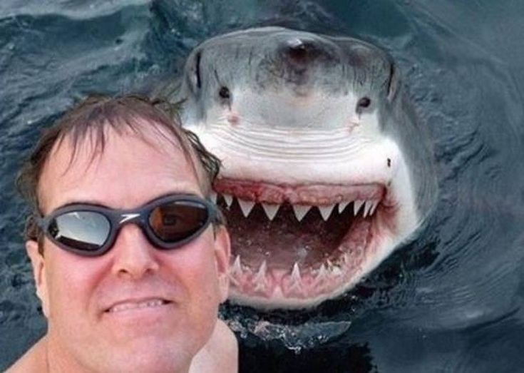 Best Most Perfectly Timed Photos Images On Pinterest - The 19 most perfectly timed selfies ever