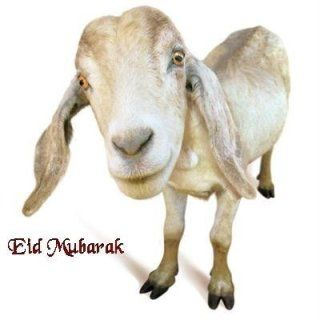 Eid ul Adha / Bakra Eid Latest HD wallpapers Collection 2013