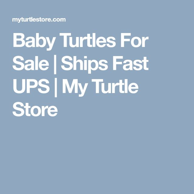 Baby Turtles For Sale | Ships Fast UPS | My Turtle Store