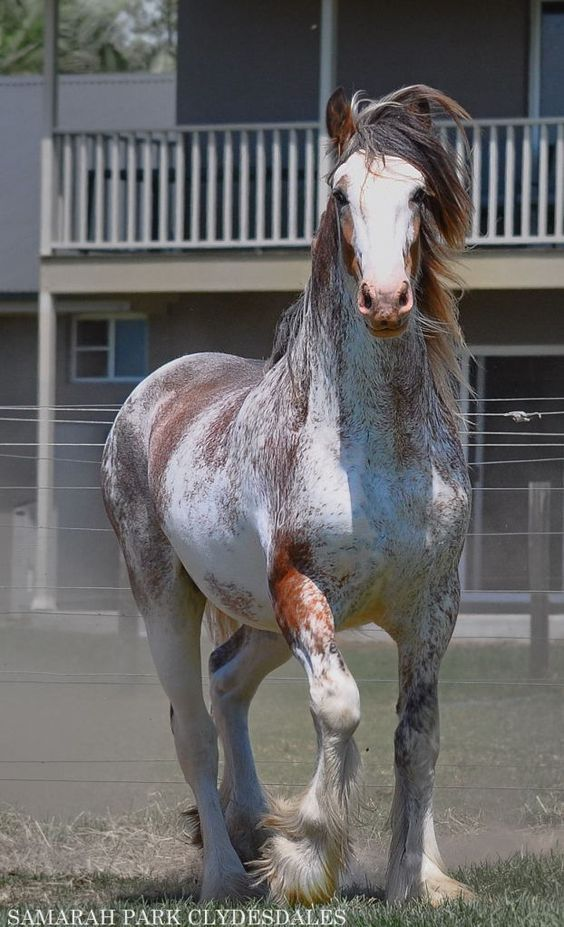 (87) Horse Passion - Photos