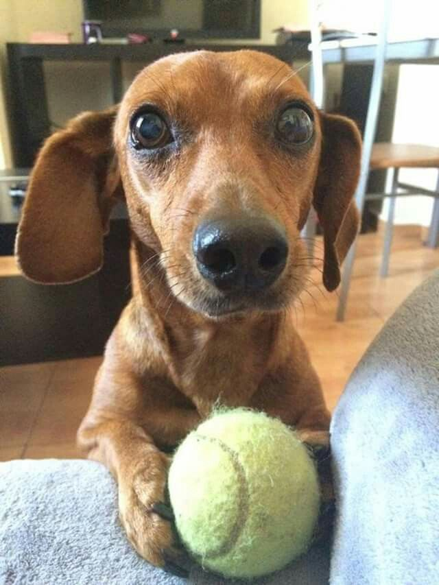 Please just throw it for me one more time?!                              …