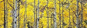 ASPENS CLIFFSIDES - by Steven Friedman