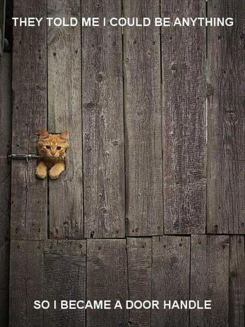 they told me i could be anything so i became a door handle. funny kitten thinks he is a door handle