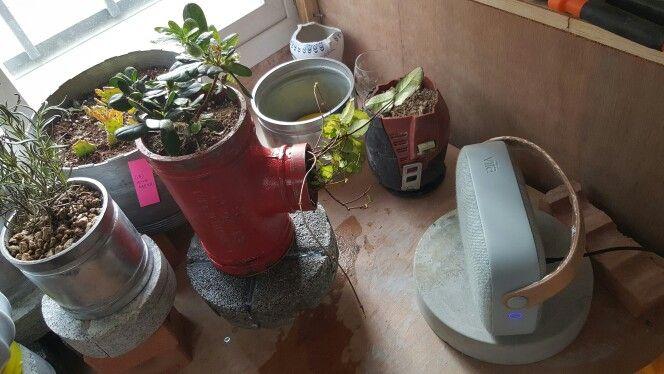 비파와 배관식물