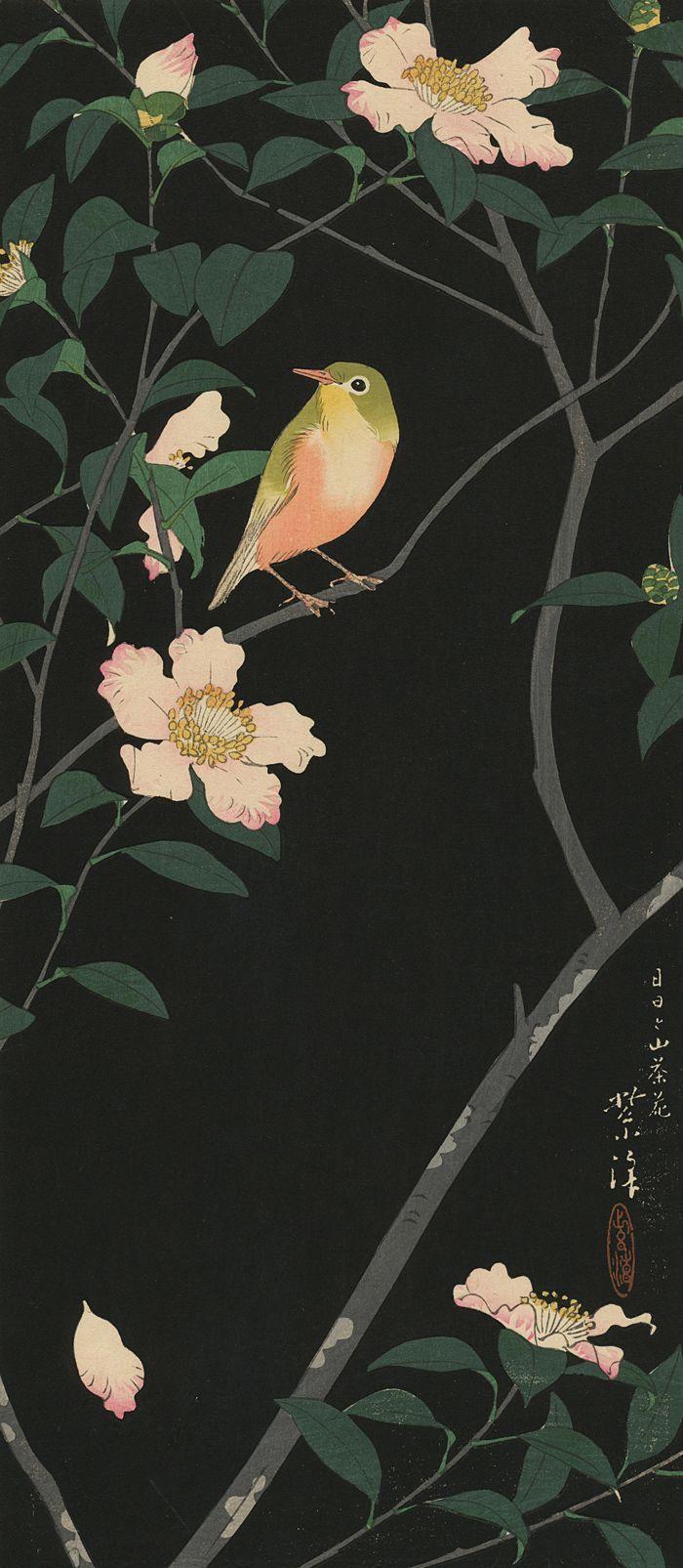 Kasamatsu Shiro : Bush Warbler on Camelia Branch (o-tanzaku), ca. 1920.