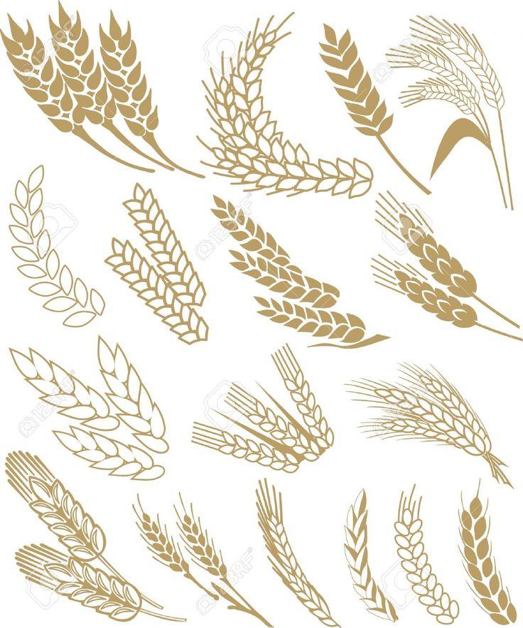 espigas-de-trigo
