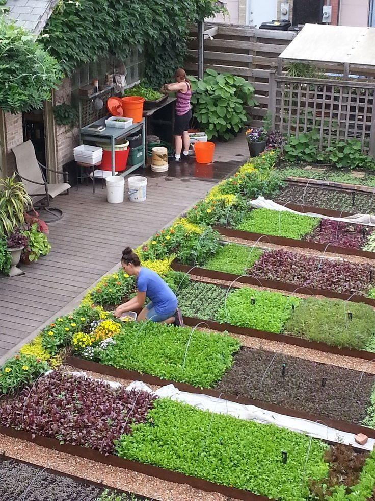 เป นระเบ ยบสวยงาม 菜園デザイン 小さな菜園 屋上ガーデン