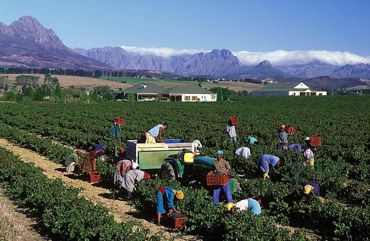 Hoopenburg harvest