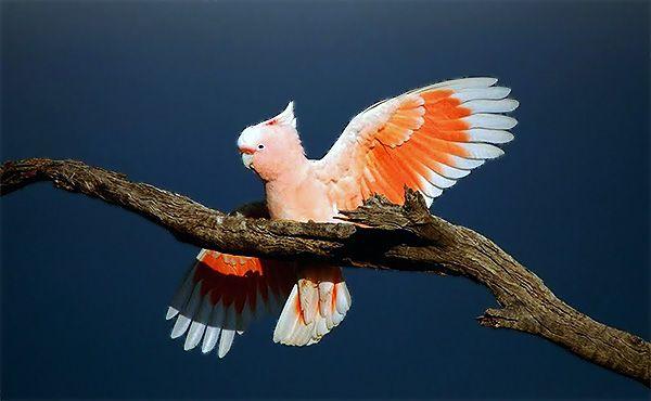 La belleza y familiaridad de los loros son características que sitúan a distintas especies de estas aves entre las más amenazadas: http://www.guiarte.com/noticias/loros-especies-amenazadas.html